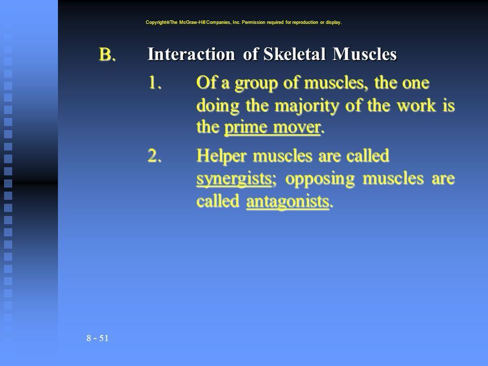 B. Interaction of Skeletal Muscles