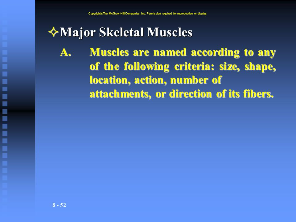 Major Skeletal Muscles