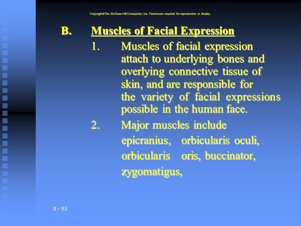B. Muscles of Facial Expression