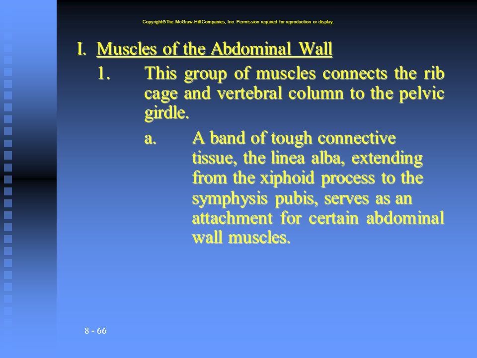 I. Muscles of the Abdominal Wall
