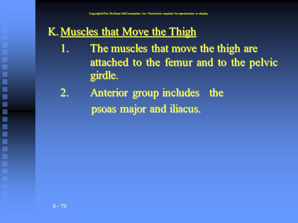 K. Muscles that Move the Thigh