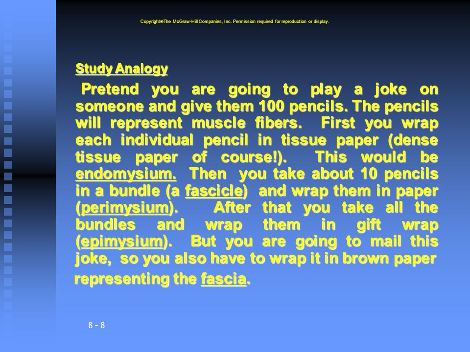Study Analogy representing the fascia.