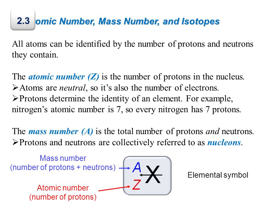 (number of protons + neutrons)