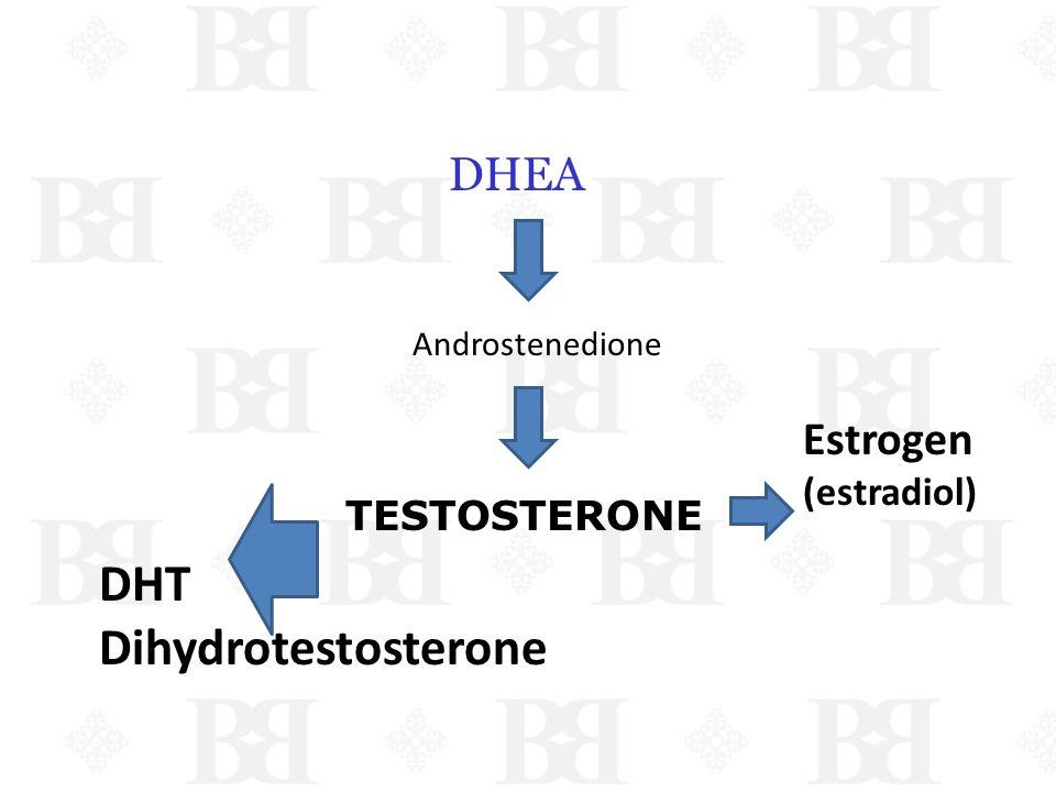DHT Dihydrotestosterone DHEA Estrogen (estradiol) TESTOSTERONE