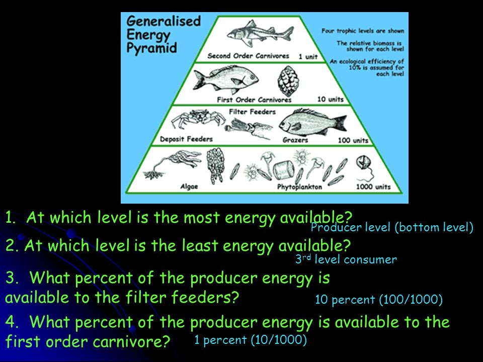 1. At which level is the most energy available