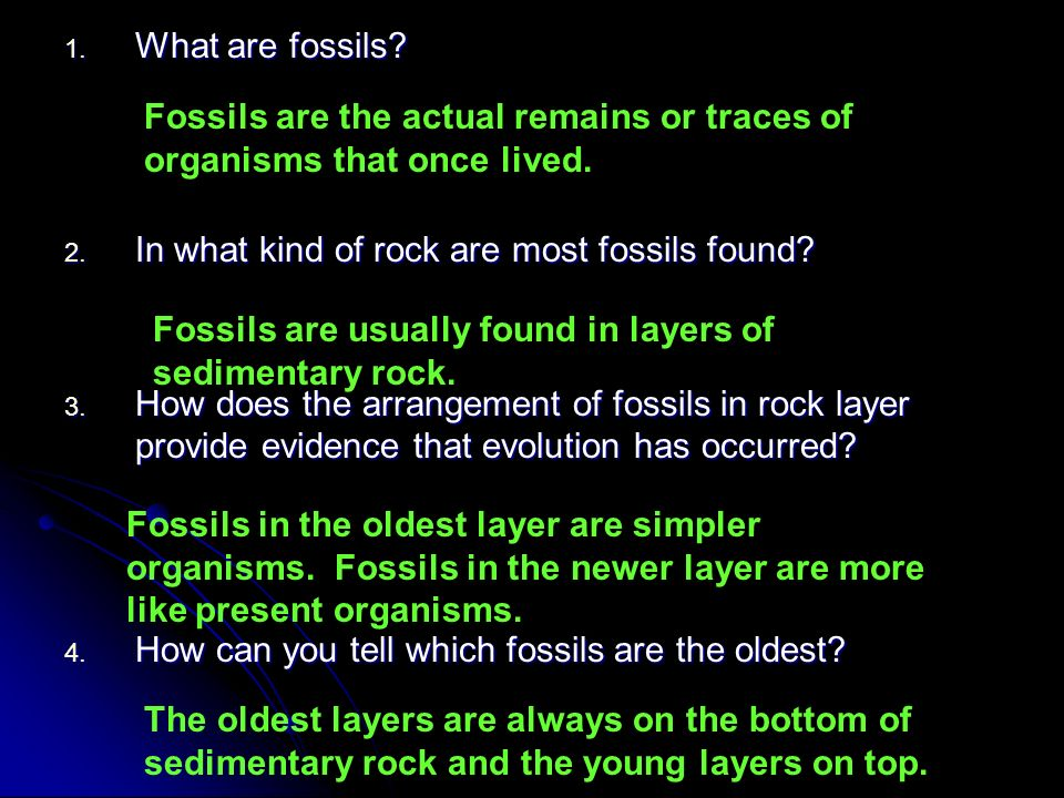What are fossils In what kind of rock are most fossils found