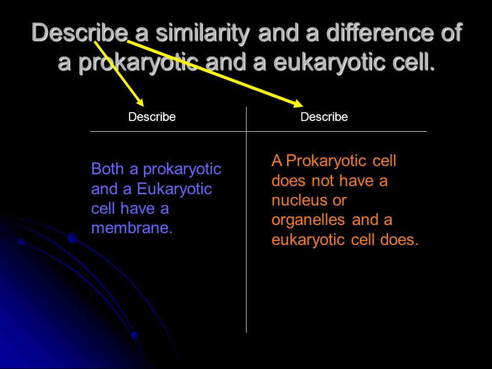 Describe a similarity and a difference of a prokaryotic and a eukaryotic cell.
