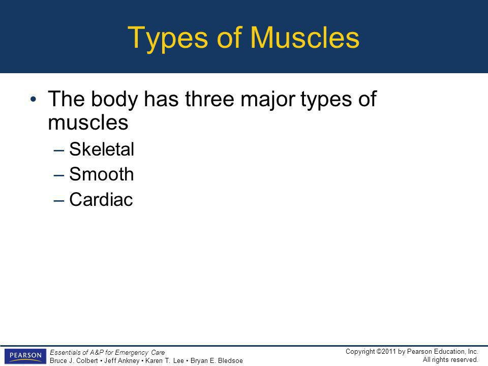 Types of Muscles The body has three major types of muscles Skeletal
