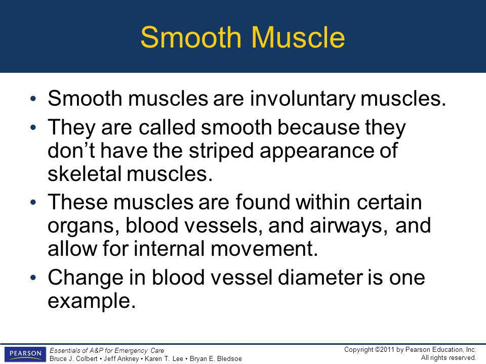 Smooth Muscle Smooth muscles are involuntary muscles.