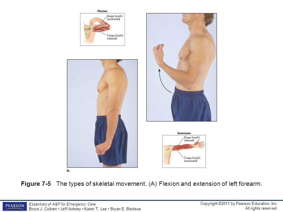 Figure 7-5 The types of skeletal movement