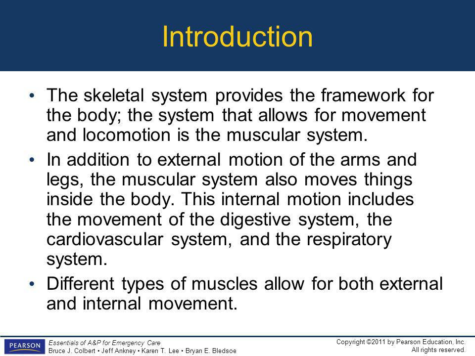 Introduction The skeletal system provides the framework for the body; the system that allows for movement and locomotion is the muscular system.