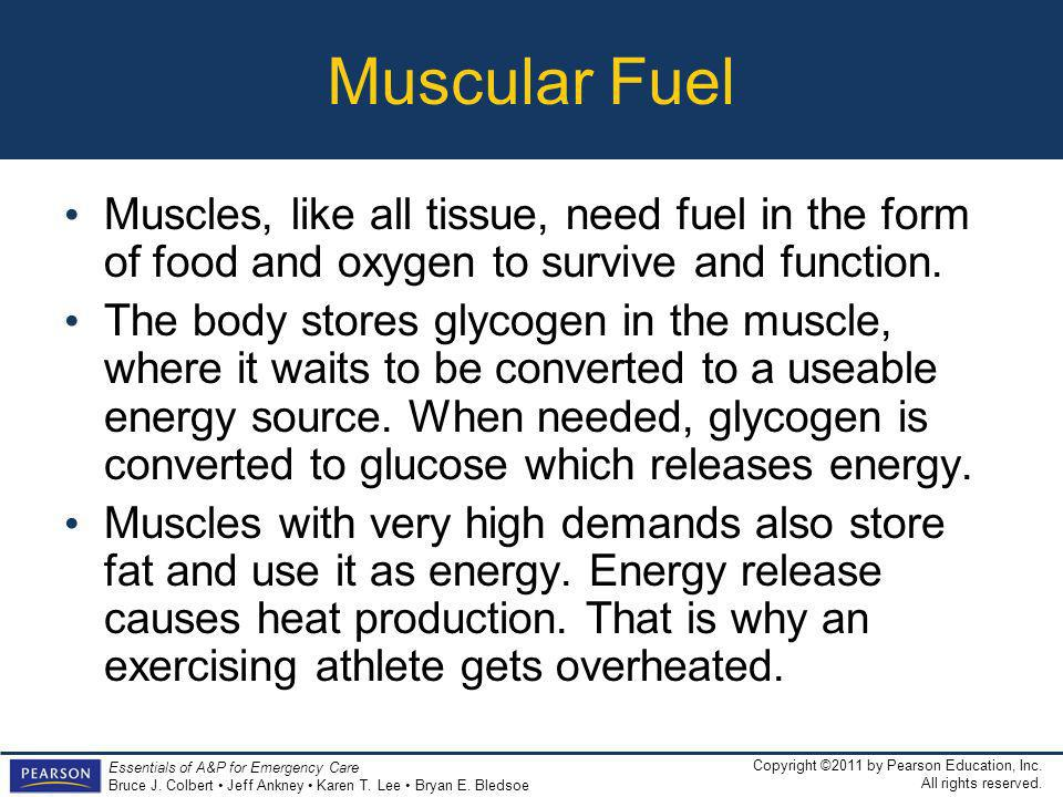 Muscular Fuel Muscles, like all tissue, need fuel in the form of food and oxygen to survive and function.