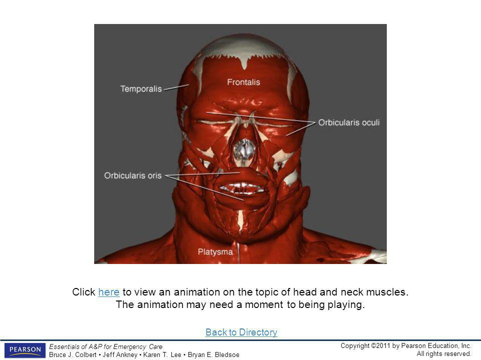Click here to view an animation on the topic of head and neck muscles