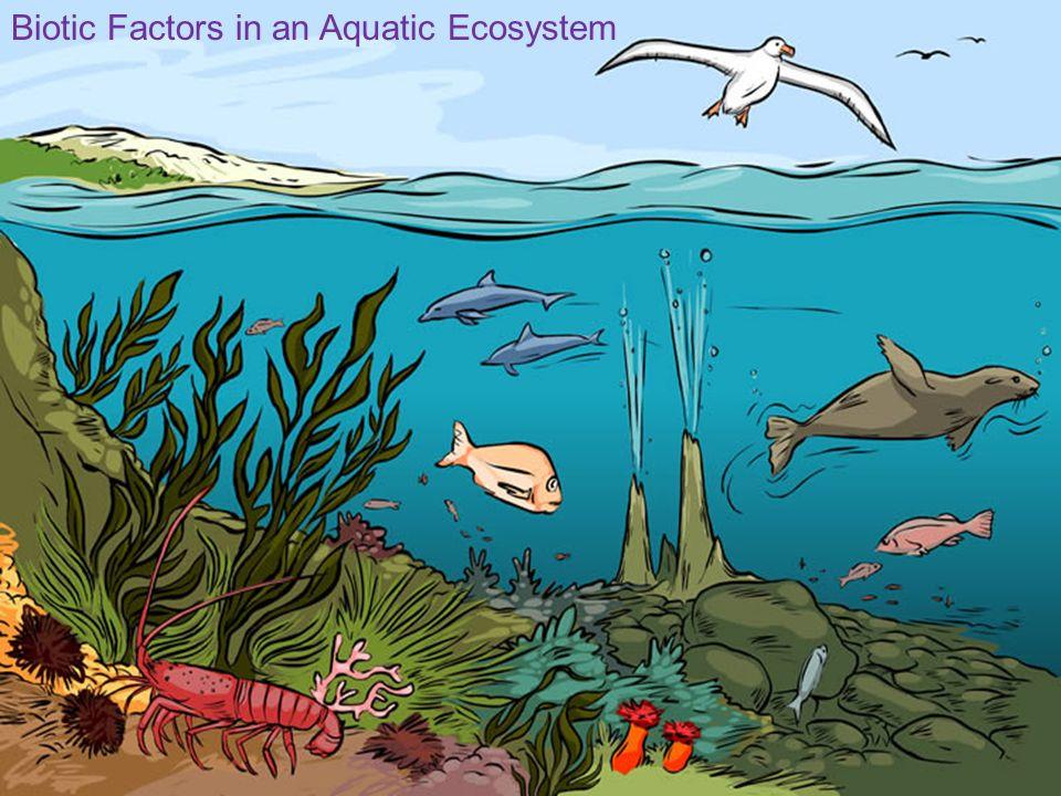 Biotic Factors in an Aquatic Ecosystem