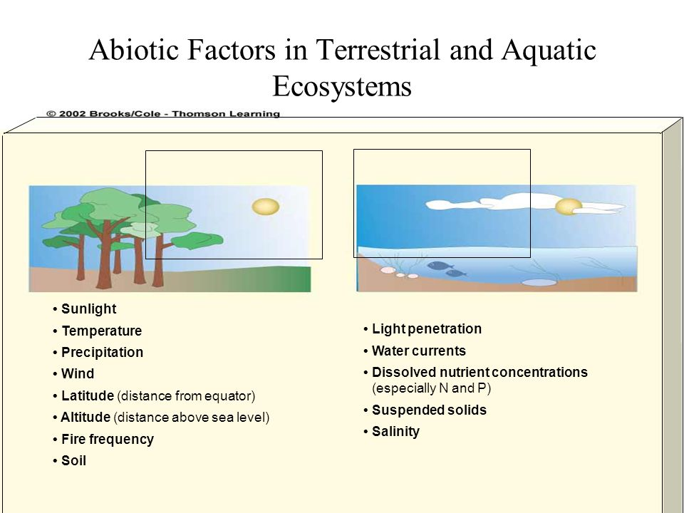 Abiotic Factors in Terrestrial and Aquatic Ecosystems
