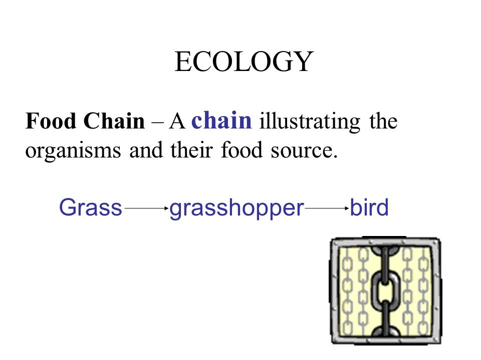 ECOLOGY Food Chain – A chain illustrating the organisms and their food source.