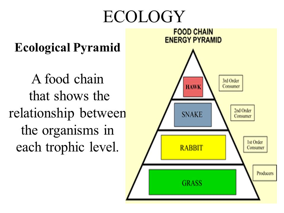 that shows the relationship between the organisms in