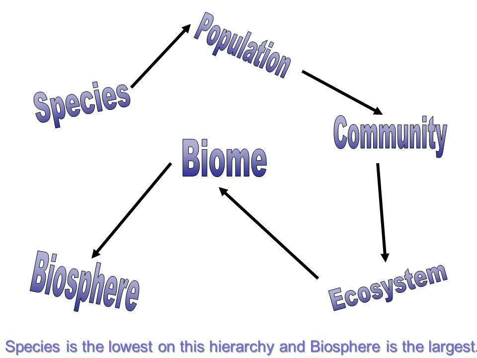 Population Species Community Biome Biosphere Ecosystem