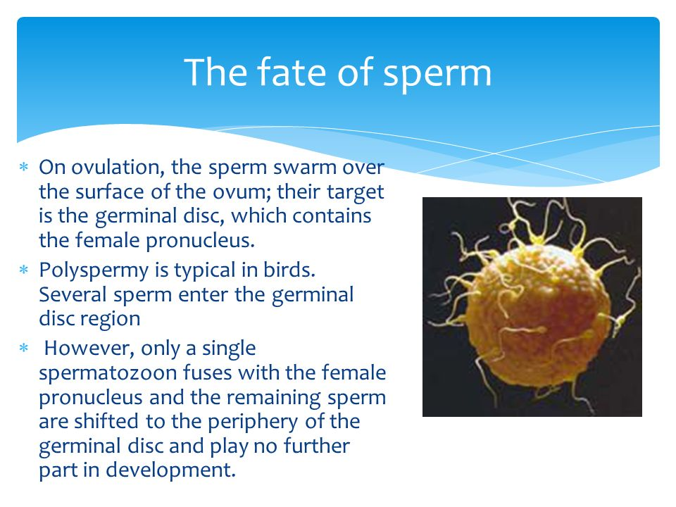 The fate of sperm