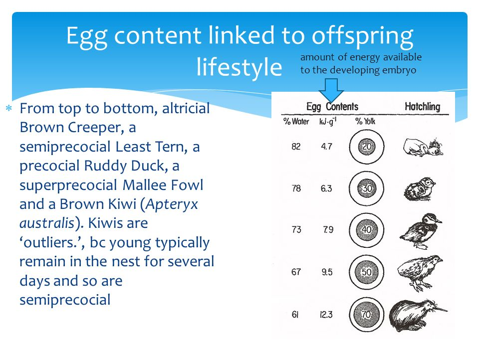 Egg content linked to offspring lifestyle
