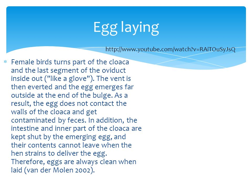 Egg laying http://www.youtube.com/watch v=RAiTOuSyJsQ.