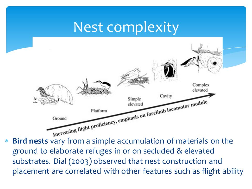 Nest complexity