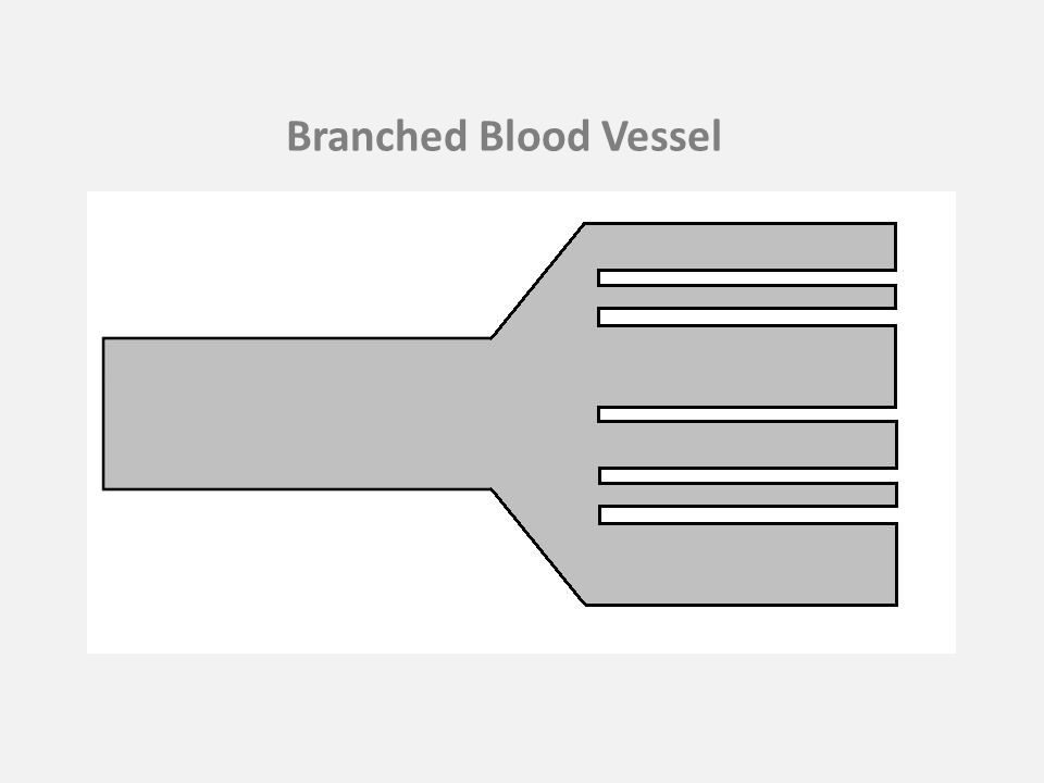 Branched Blood Vessel
