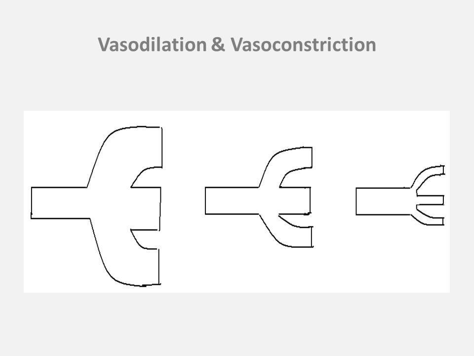 Vasodilation & Vasoconstriction