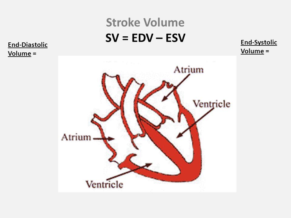 Stroke Volume SV = EDV – ESV