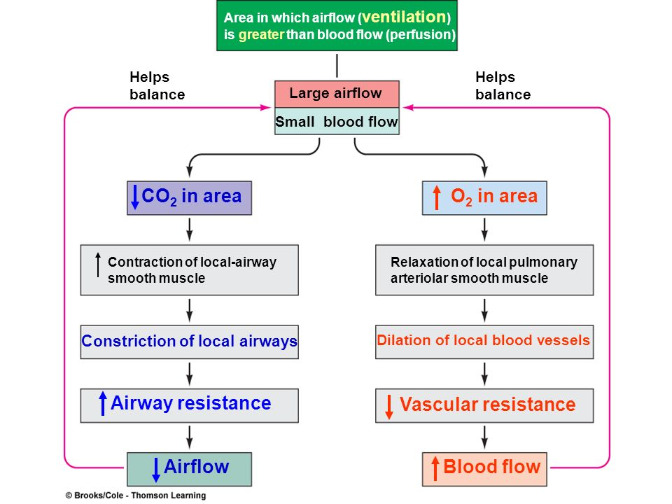 CO2 in area O2 in area Airway resistance Vascular resistance Airflow