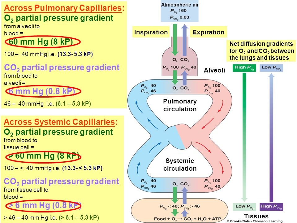 Across Pulmonary Capillaries: O2 partial pressure gradient