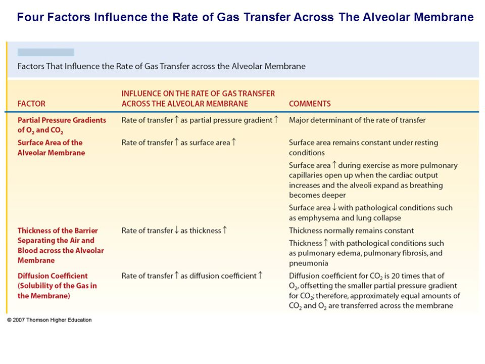 Four Factors Influence the Rate of Gas Transfer Across The Alveolar Membrane