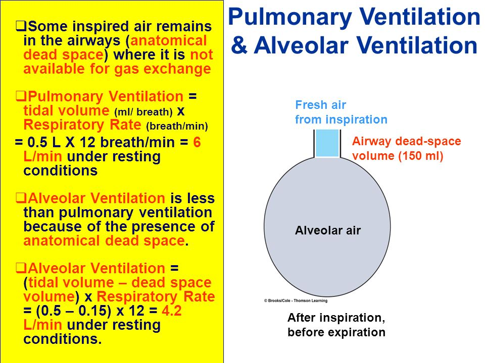 Pulmonary Ventilation & Alveolar Ventilation