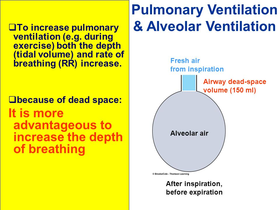 The effects of exercise on the pulmonary ventilation rate essay