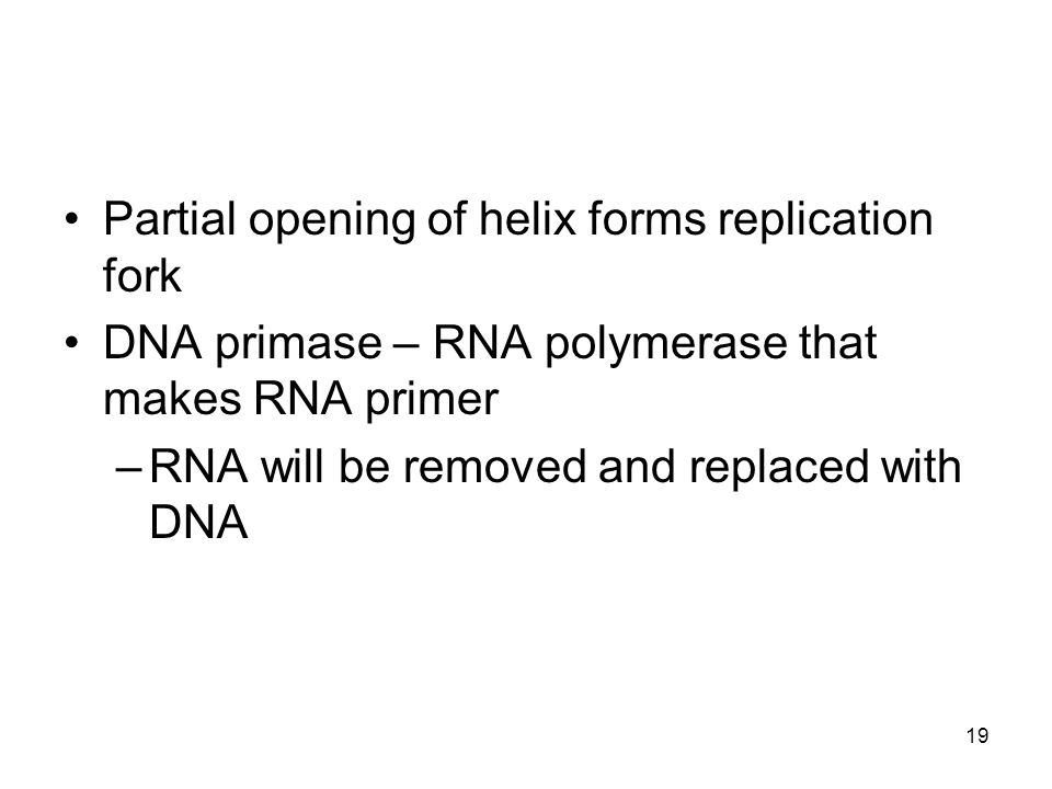 Partial opening of helix forms replication fork