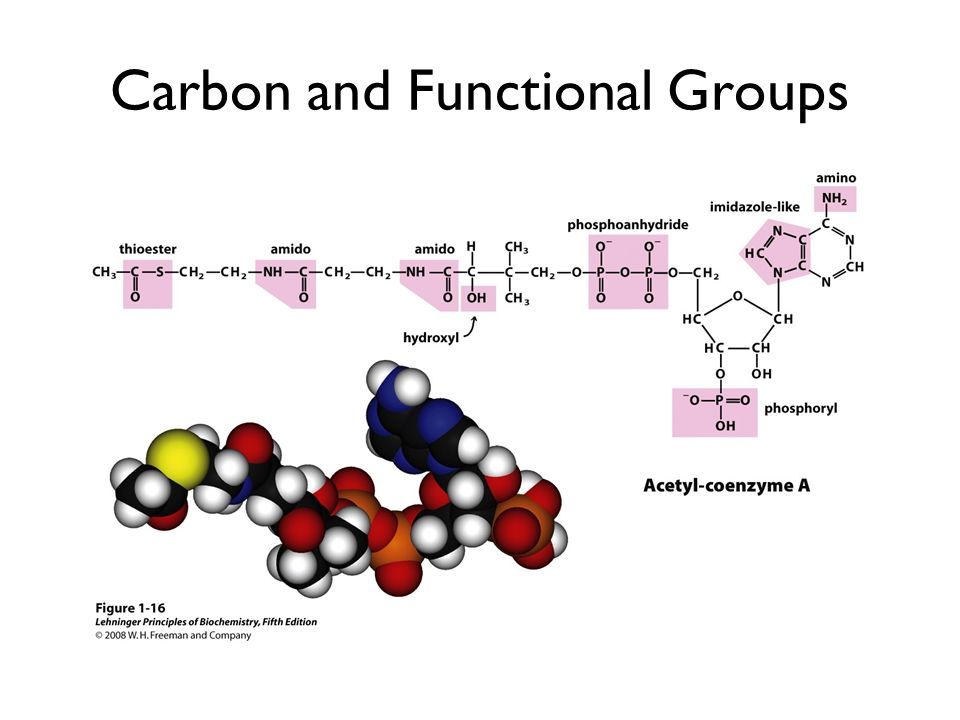 Carbon and Functional Groups