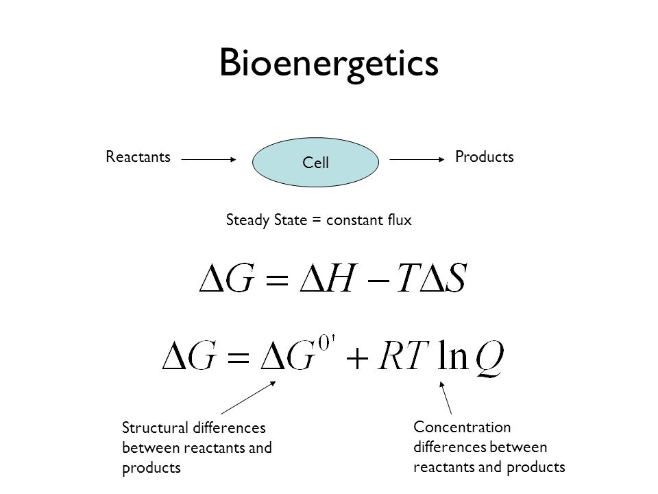 Bioenergetics Cell Reactants Products Steady State = constant flux