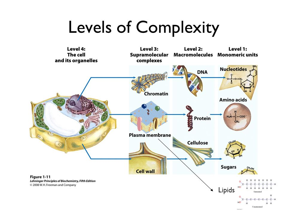Levels of Complexity Lipids