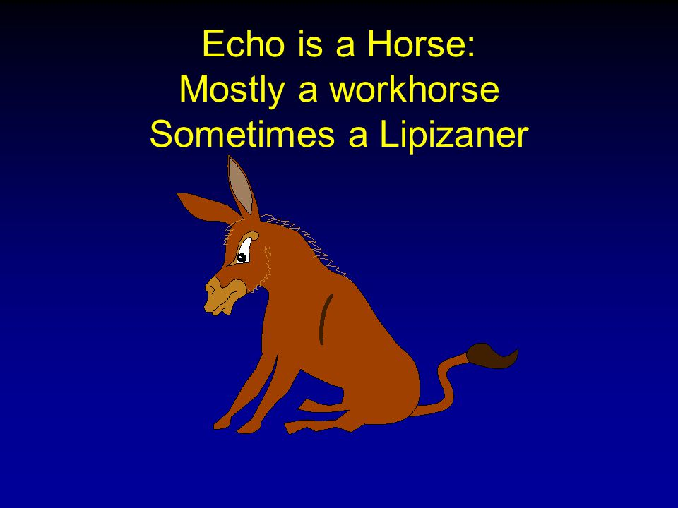 Echo is a Horse: Mostly a workhorse Sometimes a Lipizaner
