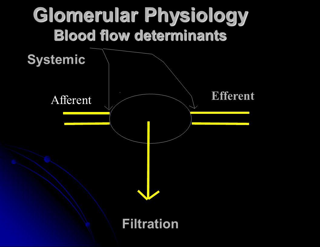 Glomerular Physiology Blood flow determinants