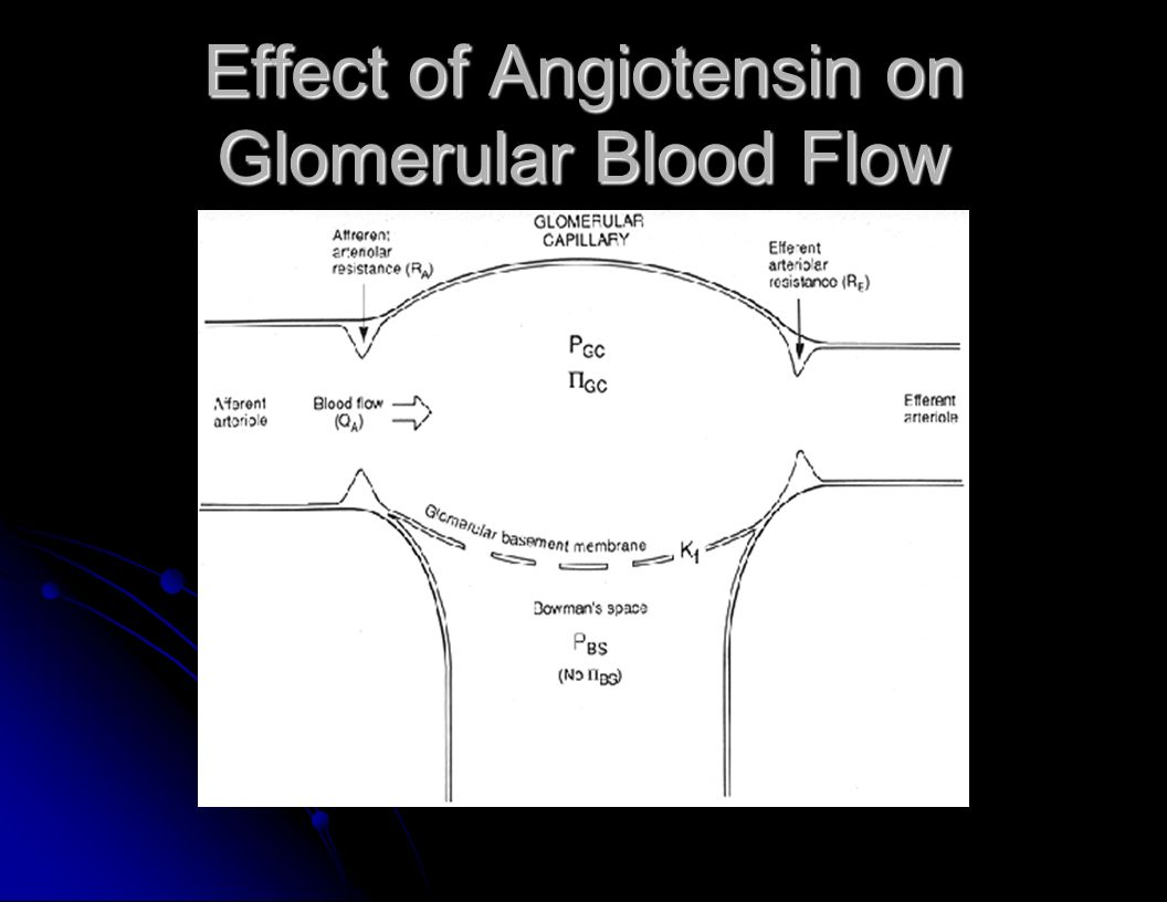 Effect of Angiotensin on Glomerular Blood Flow