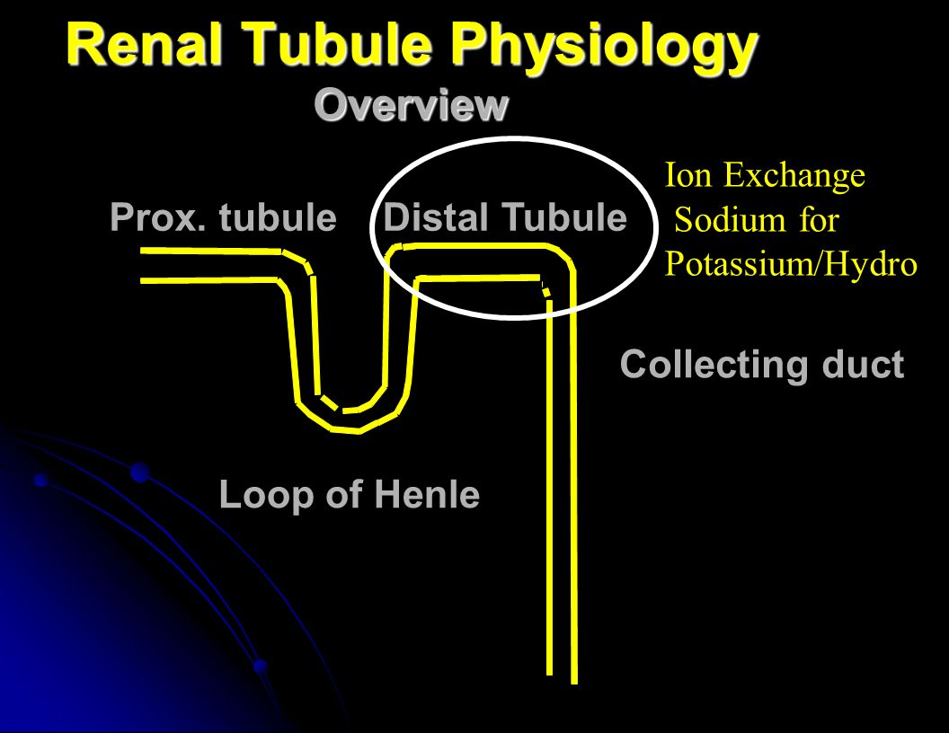 Renal Tubule Physiology Overview