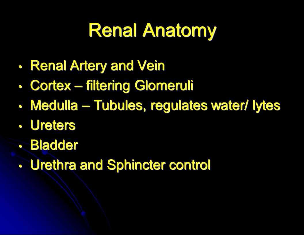 Renal Anatomy Renal Artery and Vein Cortex – filtering Glomeruli