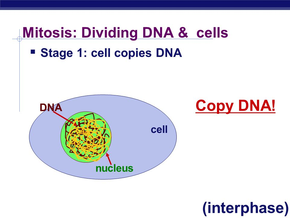 Mitosis: Dividing DNA & cells