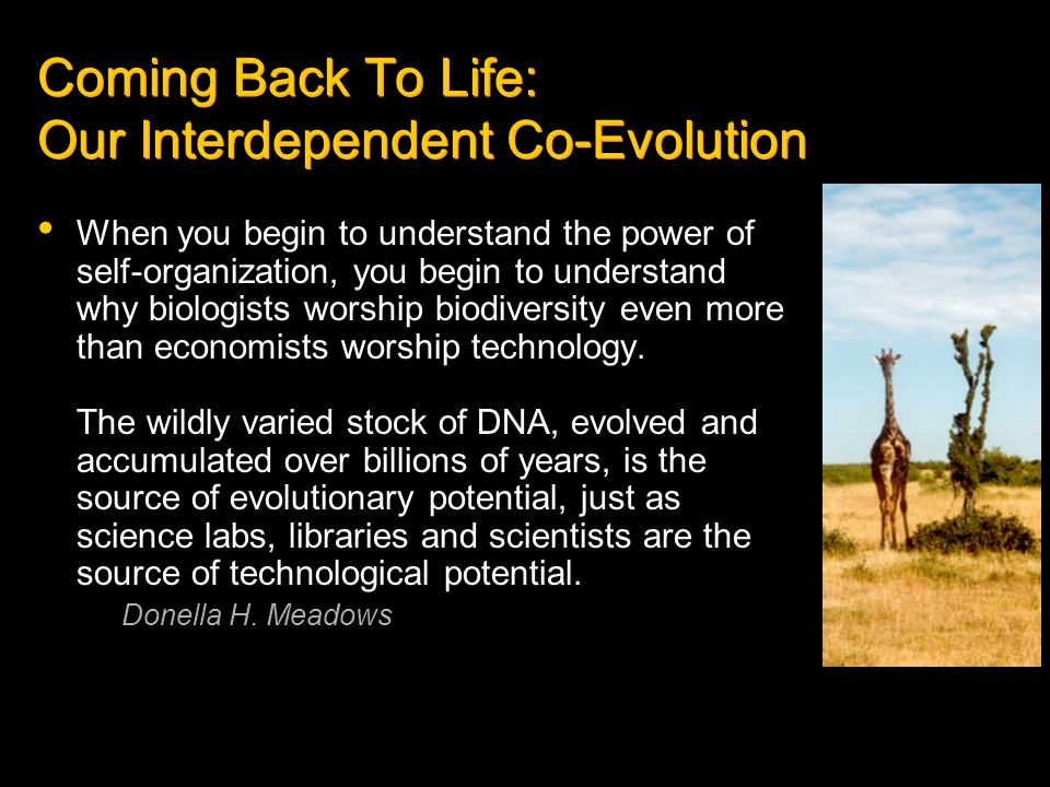 Coming Back To Life: Our Interdependent Co-Evolution
