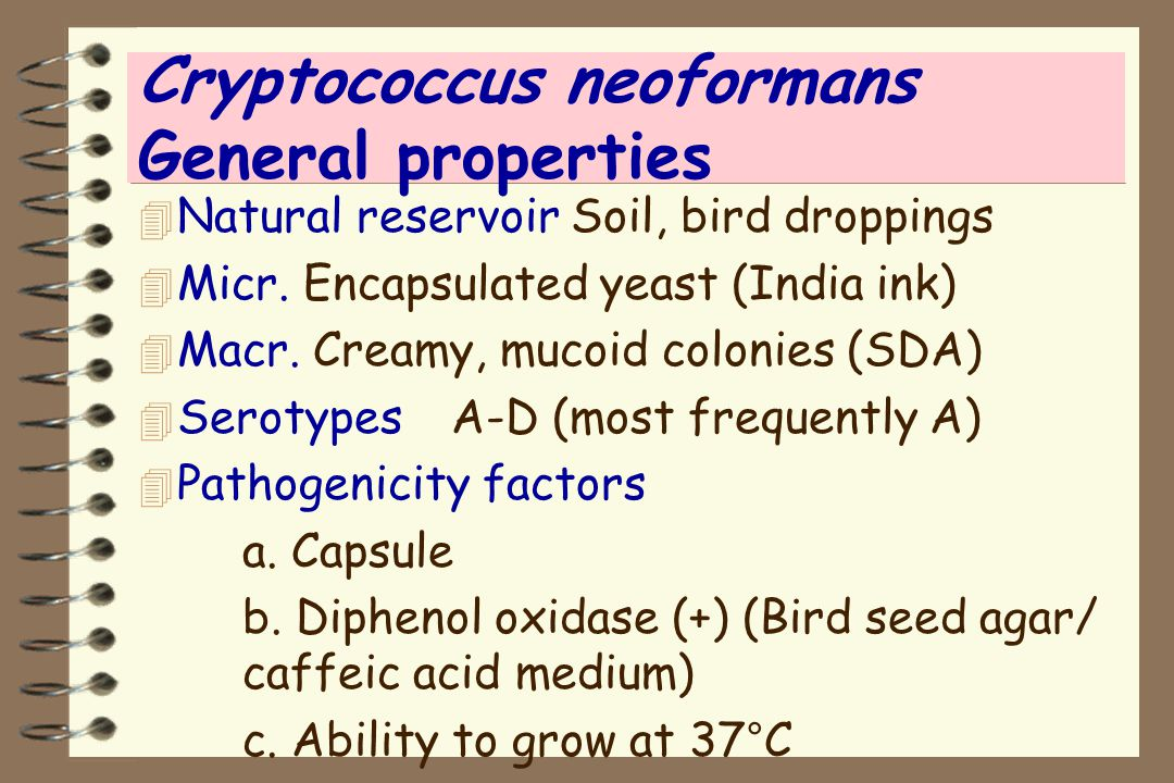 Cryptococcus neoformans General properties