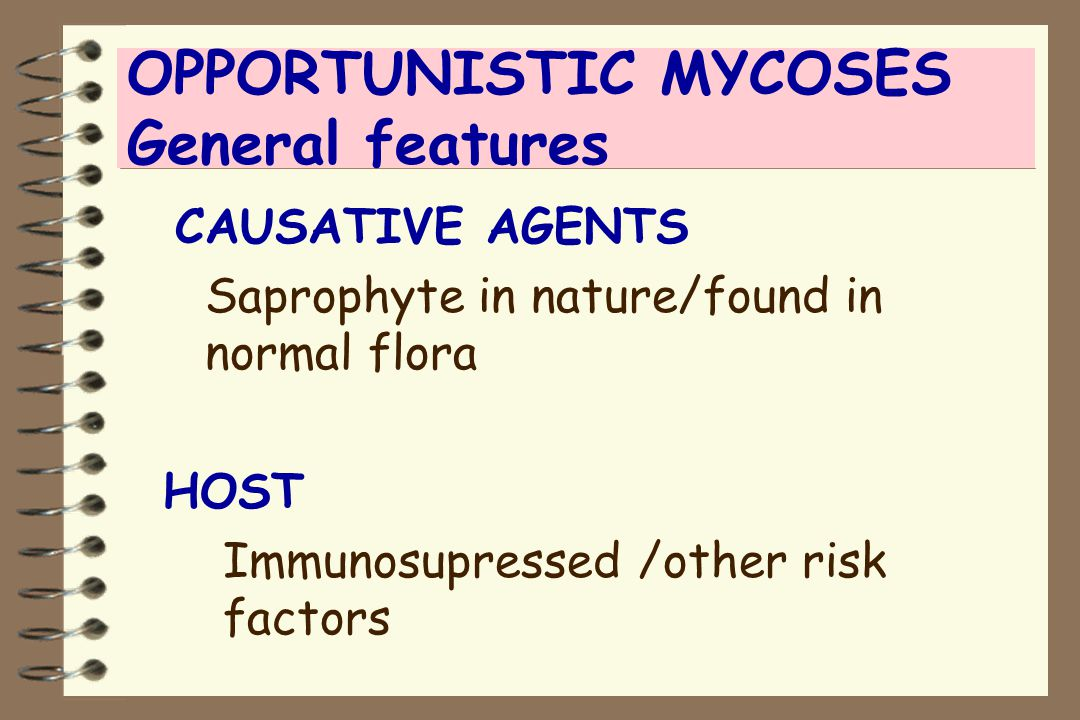 OPPORTUNISTIC MYCOSES General features