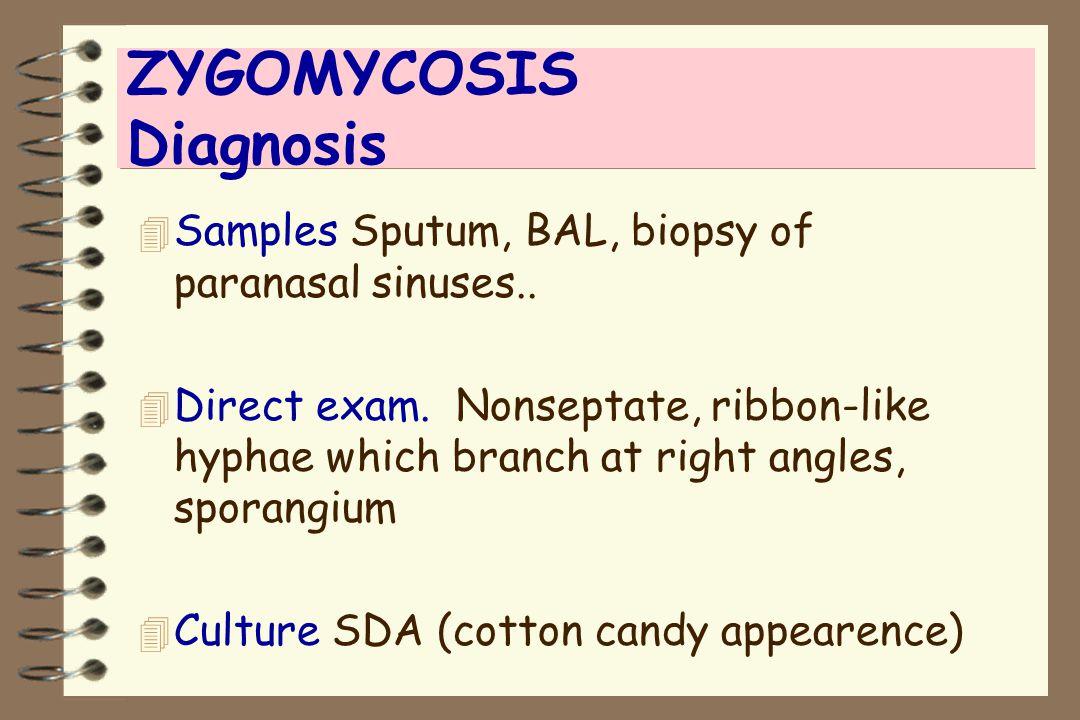 ZYGOMYCOSIS Diagnosis