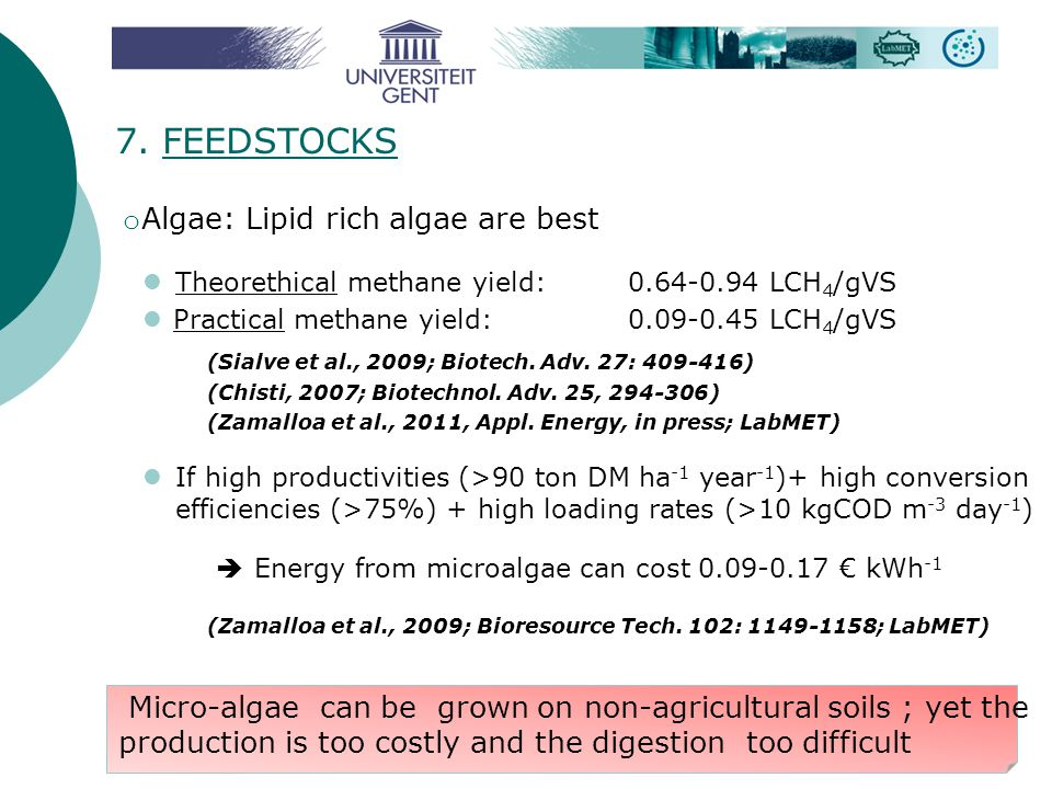 7. FEEDSTOCKS Algae: Lipid rich algae are best