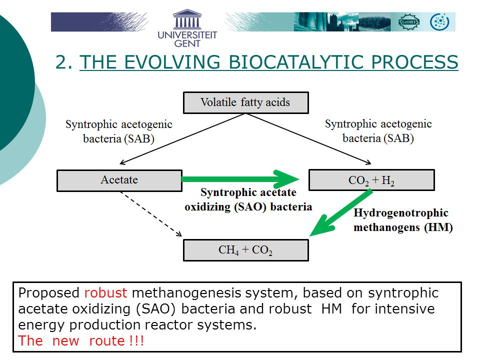 2. THE EVOLVING BIOCATALYTIC PROCESS